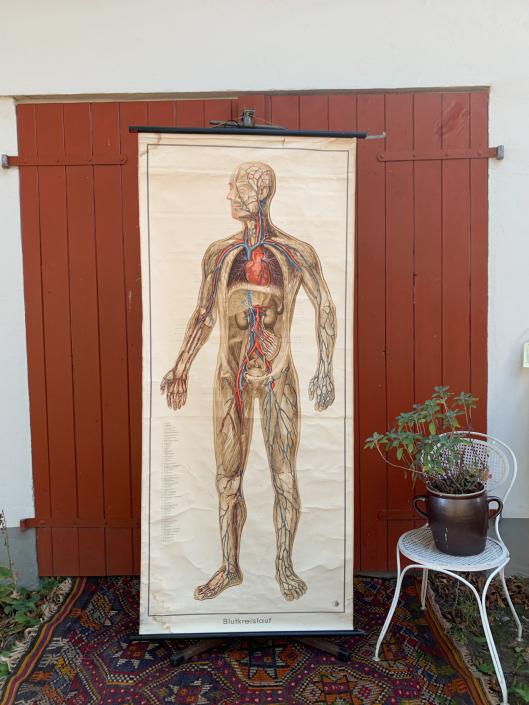 Vintage Schaubild / Schultafel Blutkreislauf